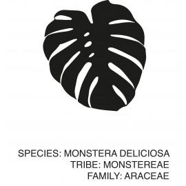 "Poster ""Monstera"""